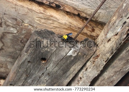 The Carpenter Bee Is Moving Into Its Nest Life Cycle Of