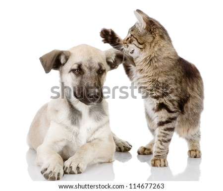 the cat beats a dog. isolated on white background