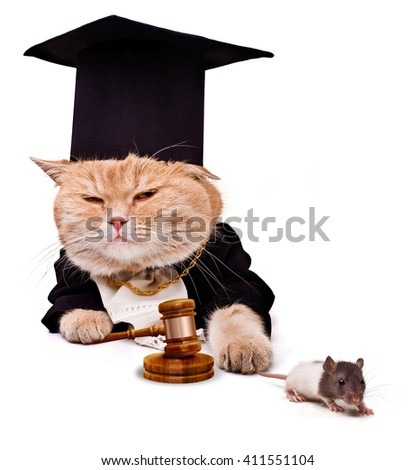 The cat caught the mouse.Ð¡at with judicial gavel. - stock photo