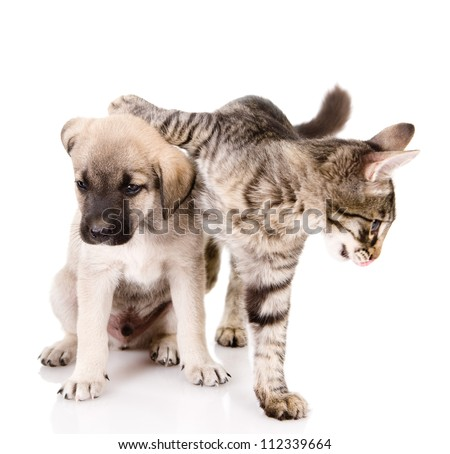 the cat embraces a dog. isolated on white background - stock photo