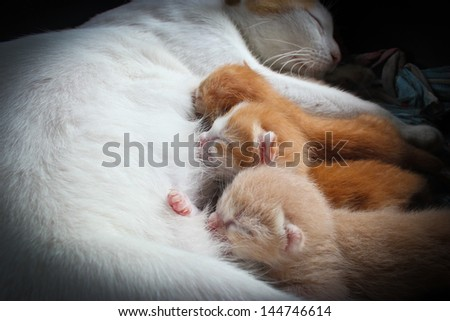 The cat feeds a kittens - stock photo