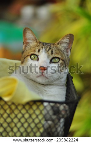 The Cat in basket