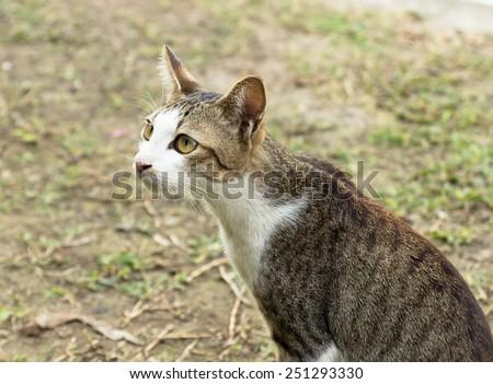 the cat in thai temple - stock photo