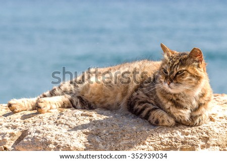 The cat is basking on a rock by the sea - stock photo