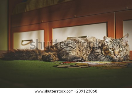 the cat is in the room and looks in the face of - stock photo