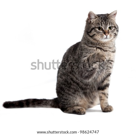 the cat is isolated on a white background