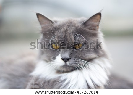 The cat is on the table In the background blurred colorful cute cats close up funny playful young cat , domestic cat cat cat relaxing Cats play at home relaxing , elegant cat 5 - stock photo