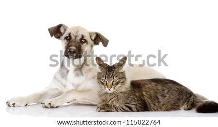 the cat lies near a dog. Isolated on a white background