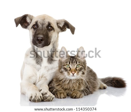 the cat lies near a dog. isolated on white background