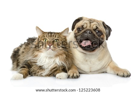 the cat lies near a dog. isolated on white background - stock photo