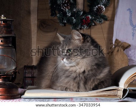 The cat lies on a large open book and looked at the old lamp. Kerosene lamp. Big Shot. Country house planks. Christmas wreath. Comfortably. Beautiful cat, gray fur, furry. Eyes are green. Cat resting