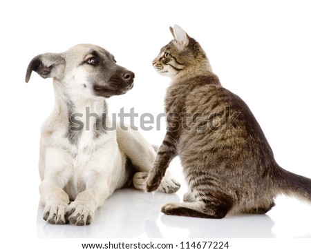 the cat looks at a dog. isolated on white background - stock photo