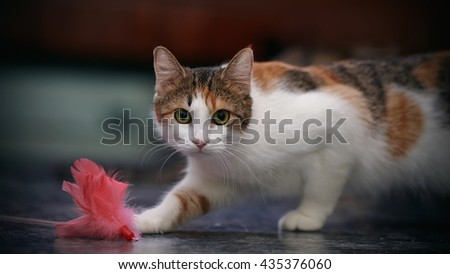 The cat of a multi-colored color plays with a toy. - stock photo