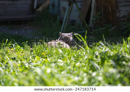 The cat on a grass - stock photo