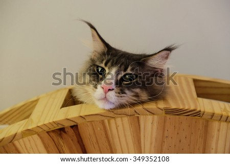 The cat on bed of cat.on grooves of Wood - stock photo