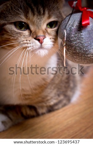 The cat plays with a ball