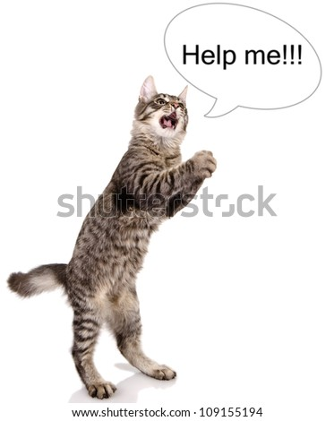 """the cat shouts """"help me"""". isolated on white background - stock photo"""