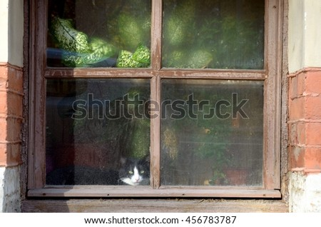 The cat sits in the window and watching people on the street.