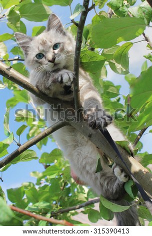 The cat sits on a tree branch