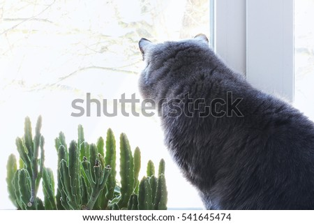 The cat sits on a window. Cat near the flowerpot. green plant in the window