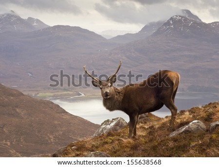 The celebrated 'Monarch of the Glen' red deer stag overlooking Loch Torridon and the dramatic Wester Ross mountain range from high up on Beinn Alligin, Scotland. - stock photo