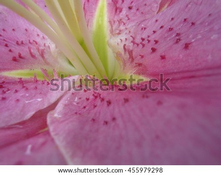 the center of a flower lily