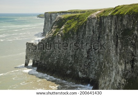 The chalk cliffs at Bempton run from Flamborough Head to Filey and are about six miles long and  330 feet high. Home to many sea birds and has the only mainland breeding colony of Gannets in the UK. - stock photo