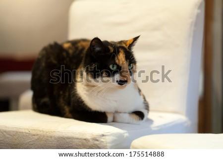 the charming cat lying on a chair