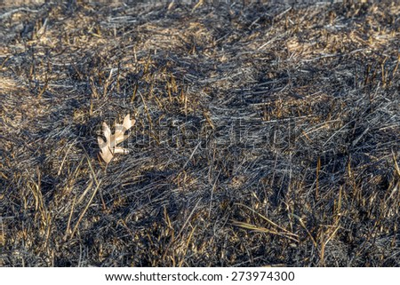 The charred remains following a prairie fire in Wisconsin - stock photo