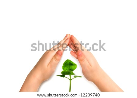 the child hand protect plant