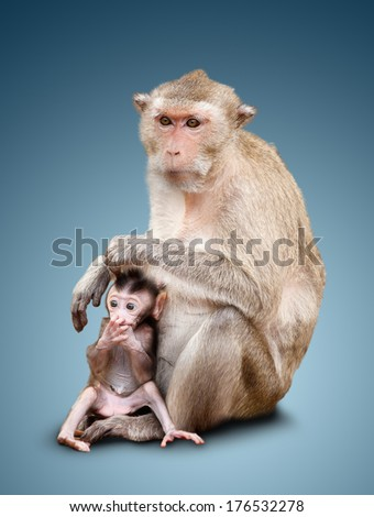 The child of a monkey and his mother. isolated on blue background