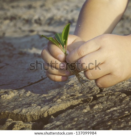 The child was holding a small seedling. Trying to plant it in the ground, but the ground is the dried, hard and cracked. - stock photo