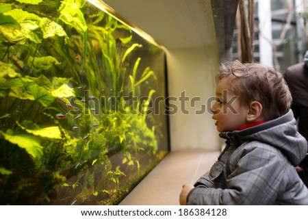 The child watching fishes in an aquarium - stock photo