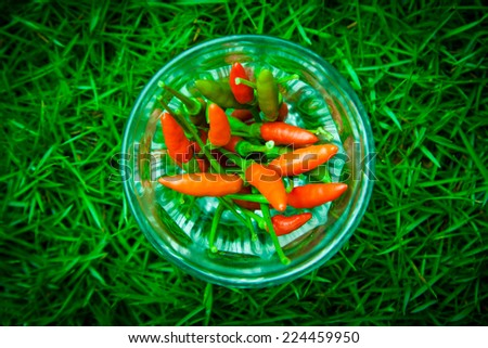 The chili peppers freshest and hottest, In the glass, On the lawn - stock photo