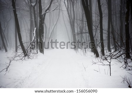 The Christmas mysterious winter snowy forest in a fog - stock photo