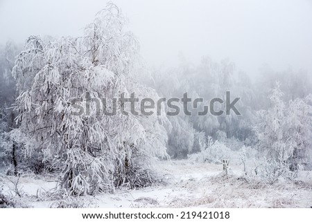 The Christmas mysterious winter snowy forest in a fog, Russia  - stock photo