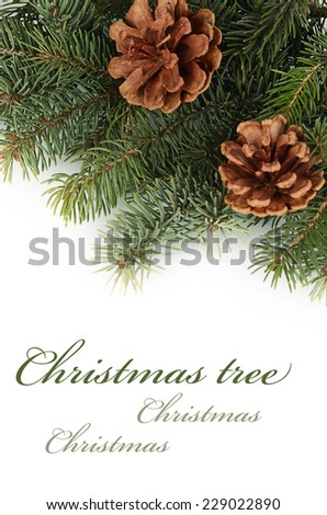 The christmas tree isolated on white background