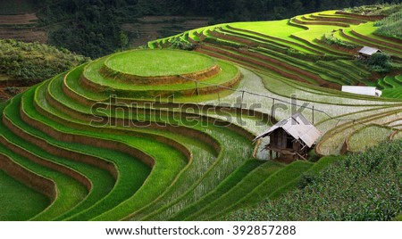 The circle rice terrace on the mountain