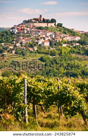 The city Motovun with vineyard- Istria - Croatia