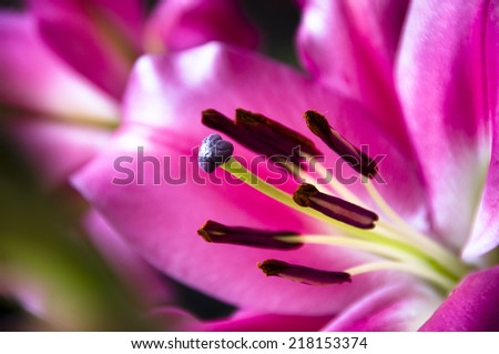 The close up of lilies over dark background - stock photo