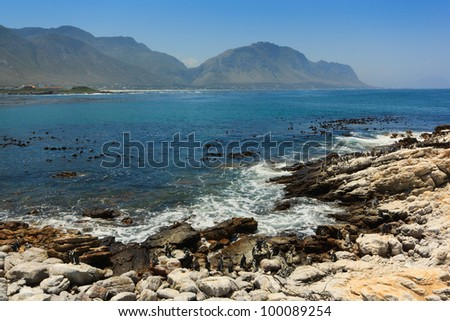 The coast at Stony Point African Penguin Colony near Betty's Bay, Western Cape, South Africa. - stock photo