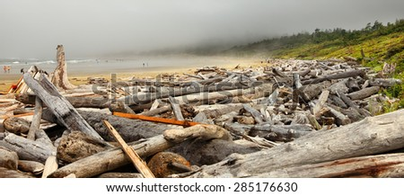 The coast of the Pacific Ocean after the storm in the foggy morning. Logs and driftwood on the Tofino beach. Pacific Ocean. British Columbia, Canada - stock photo