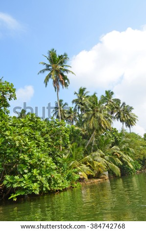 The coast of tropical river