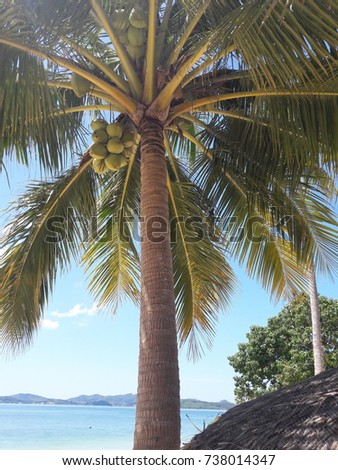 The coconut palm on background blue sky