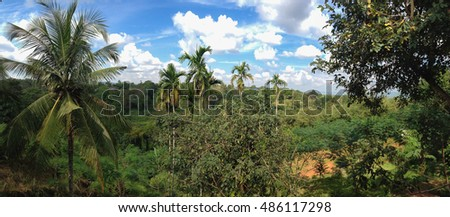 The coconut tree in the forest.