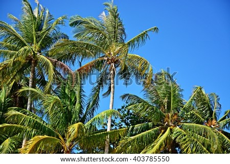 the coconut trees and blue sky background
