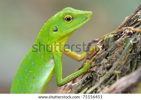 The color of Green lizard.