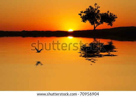the color of sunset - stock photo