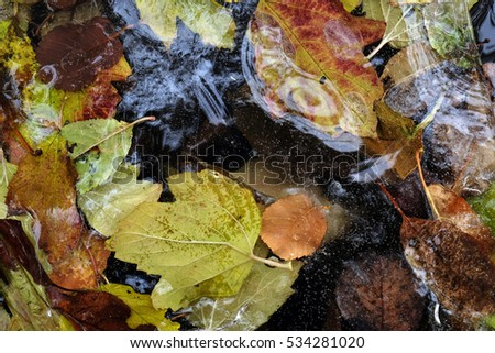 the colored fallen leaves have frozen in ice