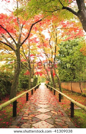 The colored leaves of the Kouetu-temple in Kyoto Japan - stock photo